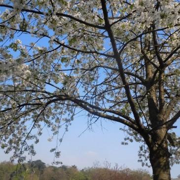 Dimanche printanier au Parc Floral de Paris… à Vincennes!