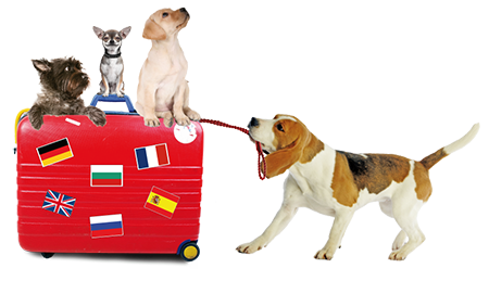 Valise_chiens