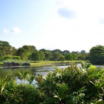 Où prendre l'air à Singapour? Découvrez nos parcs et jardins préférés!