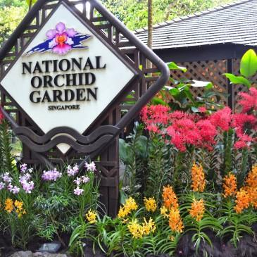 Un dimanche fleuri au National Orchid Garden