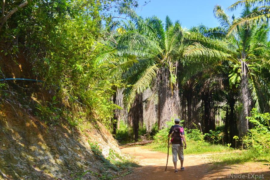 Randonnée dans la jungle à Koh Yao Noi en Thailande