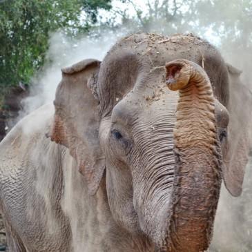 Back in Thailand Jour 3 : Le jour où j'ai croisé le regard d'un éléphant
