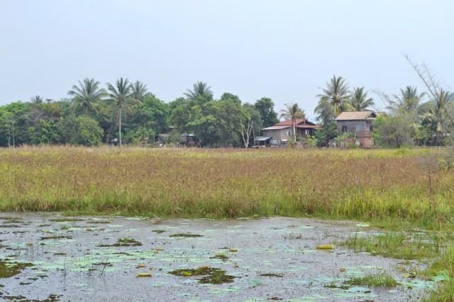 Campagne cambodgienne (Siem Reap)