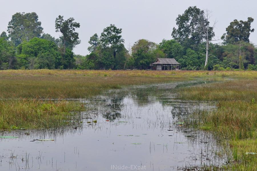 Maison isolée dans la campagne cambodgienne (Siem Reap)