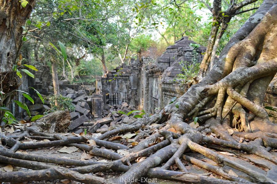 Racines d'arbre et ruines khmers à Beng Mealea (Angkor, Cambodge)