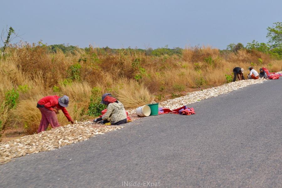 Femmes cambodgiennes travaillant le sucre de palme sur le bord de la route