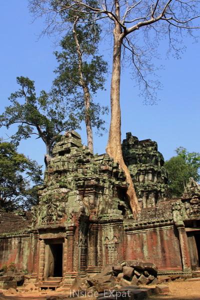 Ta Prohm, temple khmer à Angkor