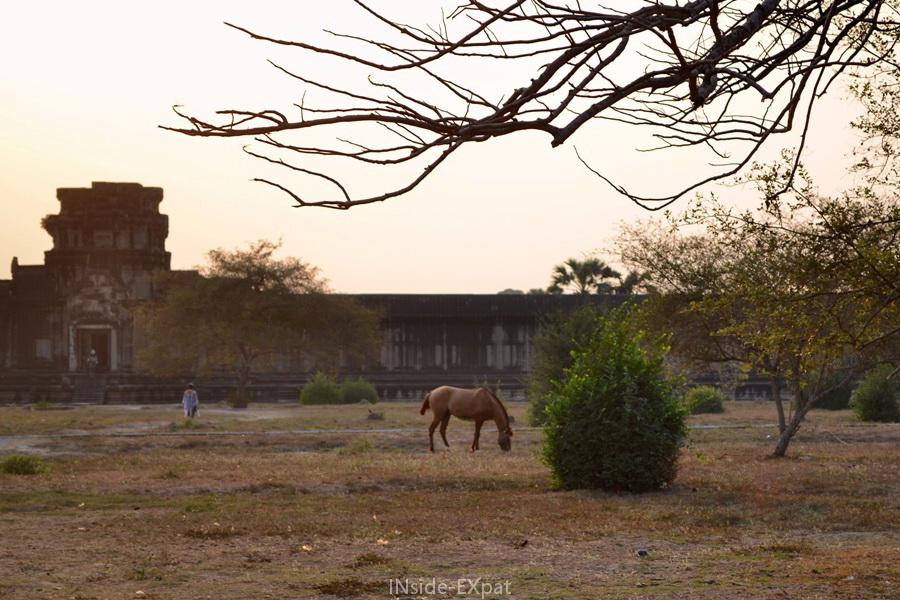 Cheval à Angkor Vat