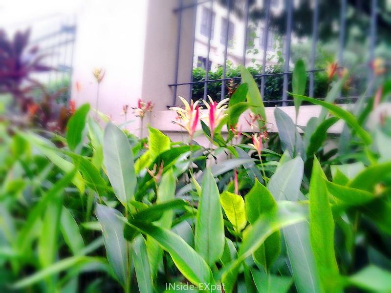 Fleurs : effet vignettage flou