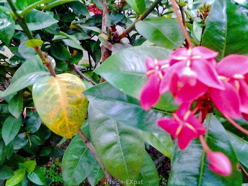 Fleurs  : saturation couleurs