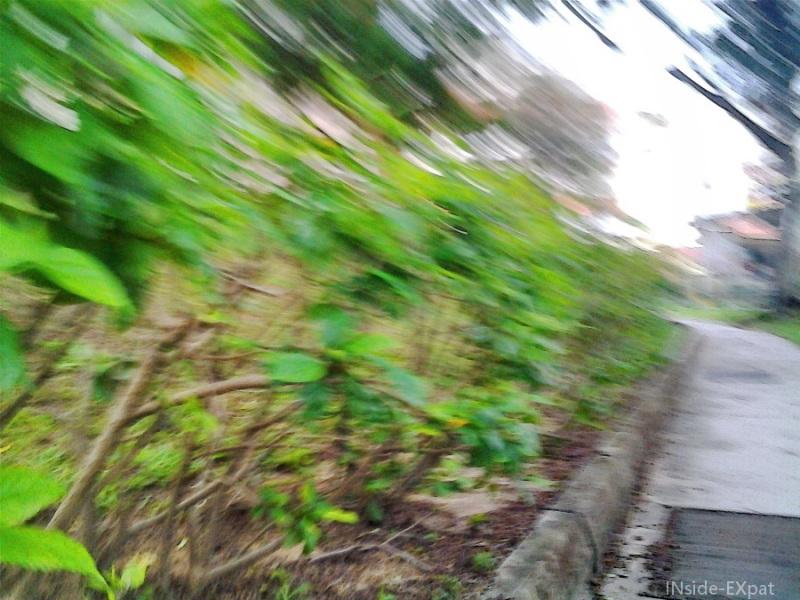 Arbustes : effet vignettage bords lumineux