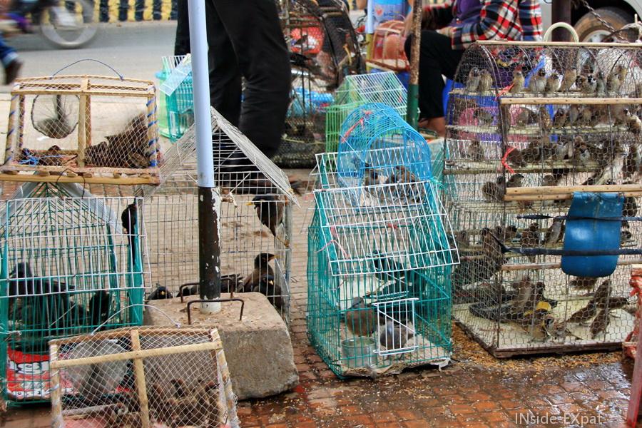 inside-expat-oiseaux-cages-siemreap