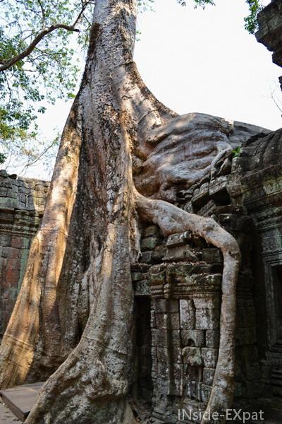 Racines d'arbres à Ta prohm, Angkor