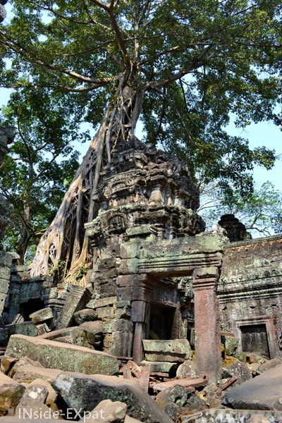 "Ta Prohm, maintenu en ""état naturel"""