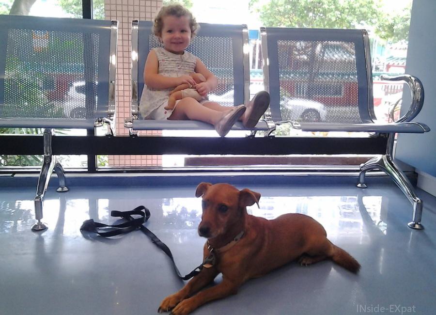 inside-expat-mimi-doggy-veto