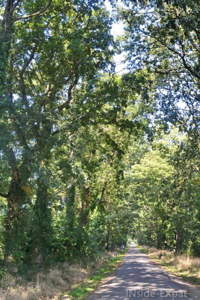 Allée d'arbres menant au Bois Rouaud