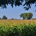 champs sur la route du bois rouaud