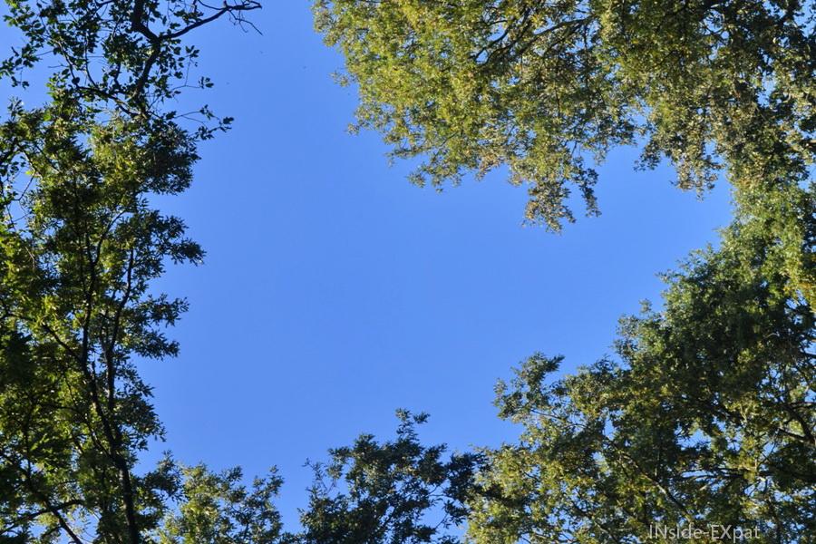 Coeur dans le ciel  formé par la cime des arbres