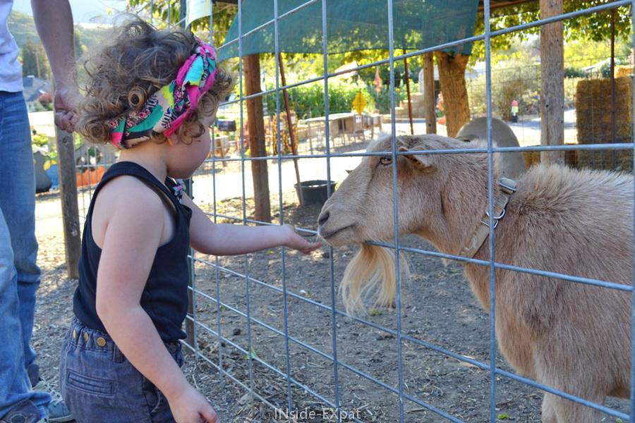 Mimi nourrit une chèvre
