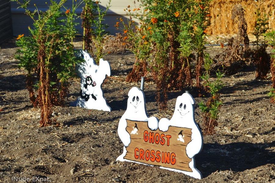 cimetières des citrouilles et fantômes