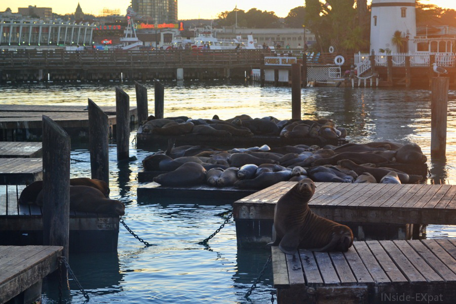 inside-expat-pier39-sealion-sanfrancisco