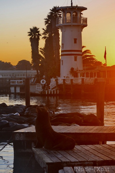 inside-expat-pier39-sealion-sunset