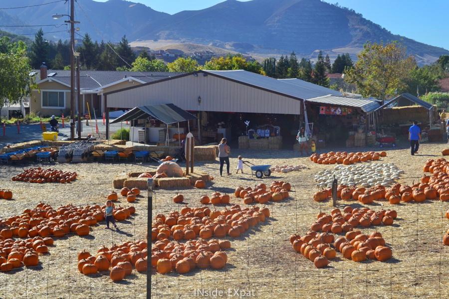 Arrivée à la Clayton Valley Pumpkin Farm