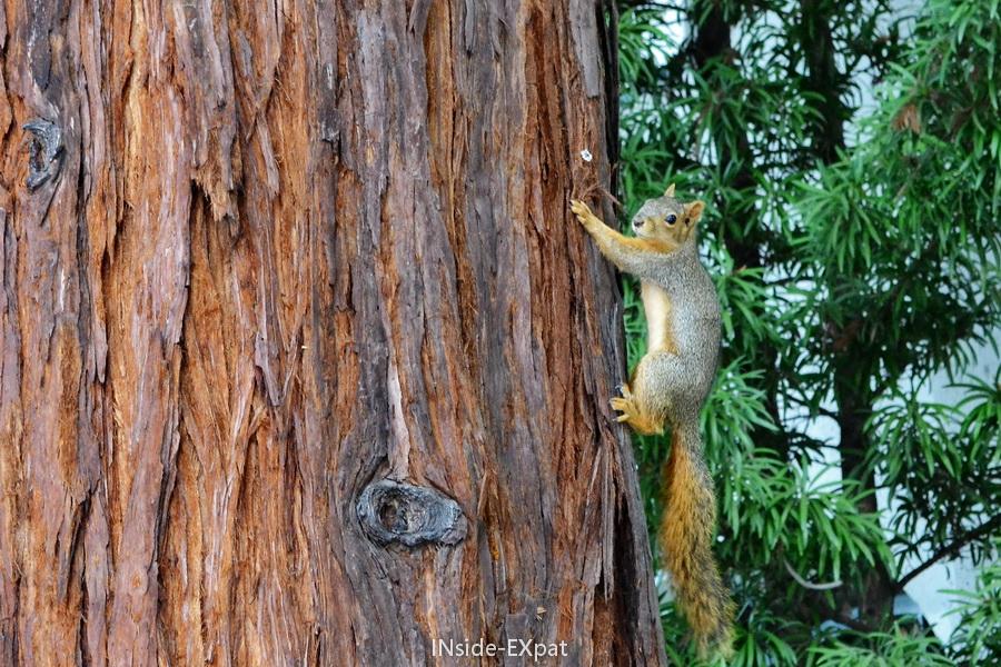 écureuil en train de grimper