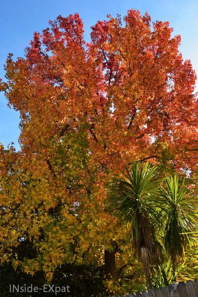 arbres aux feuilles rouge-orangé
