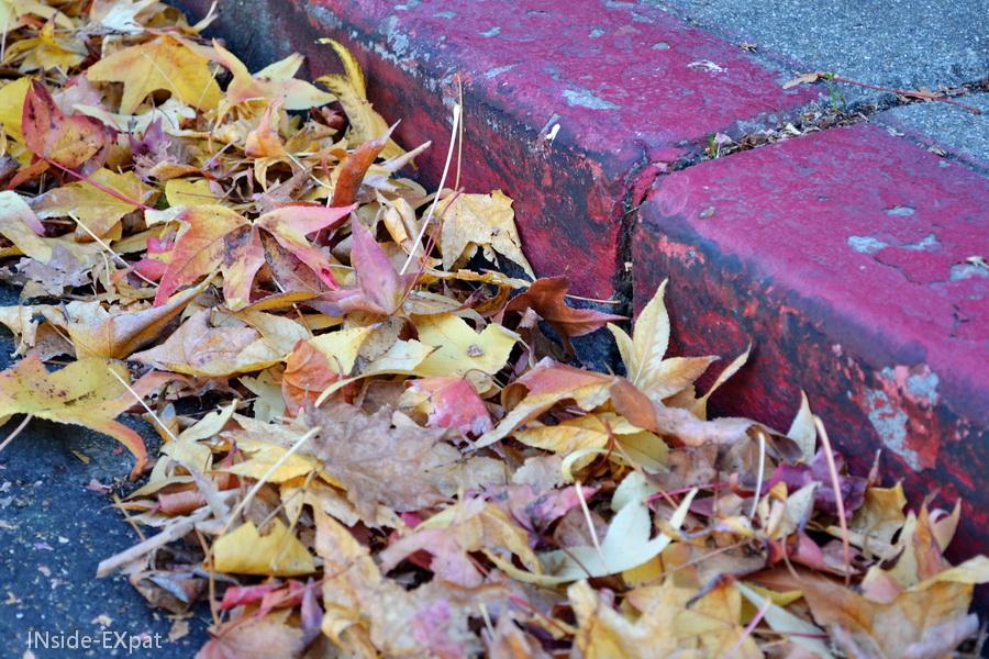 feuilles tombees