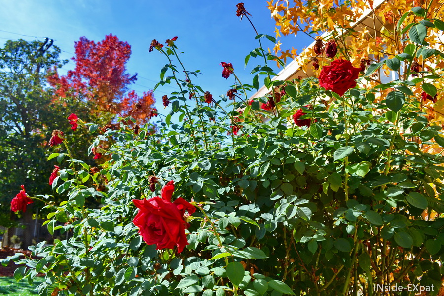 fleurs de notre jardin