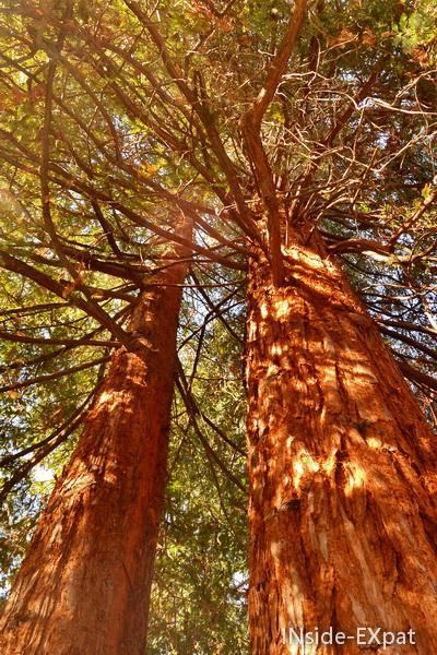 grands arbres de notre quartier