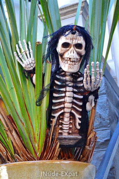 Squelette dans une plante