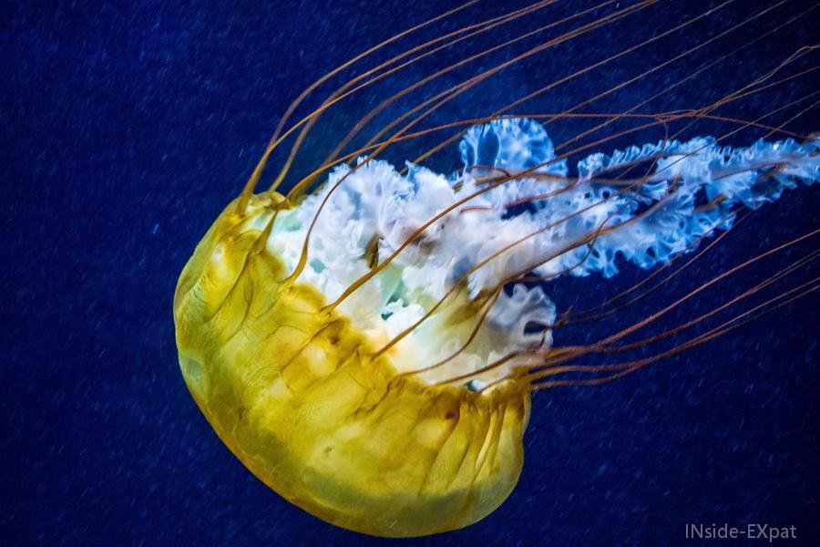 Méduse de l'Aquarium