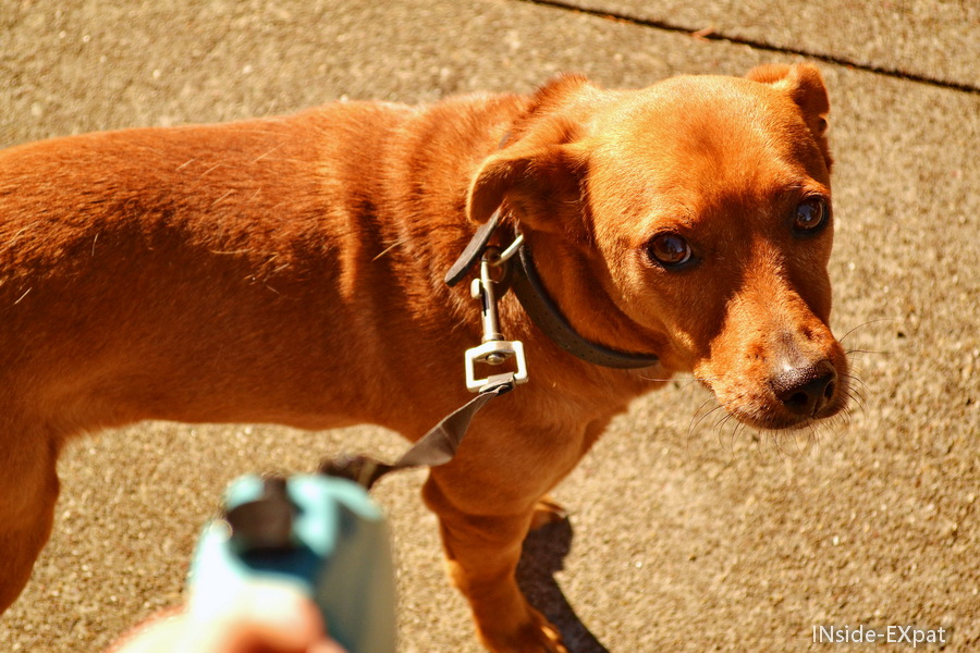 Doggy B. en balade