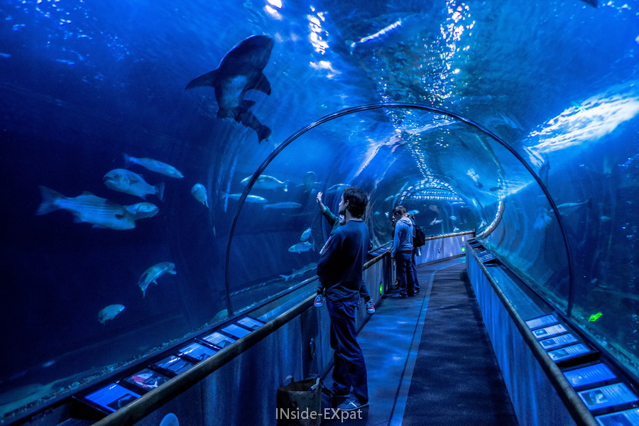 See And Touch At Aquarium Of The Bay San Francisco Ca