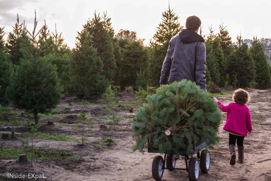 Daddy B., Mimi B. et le sapin de Noël