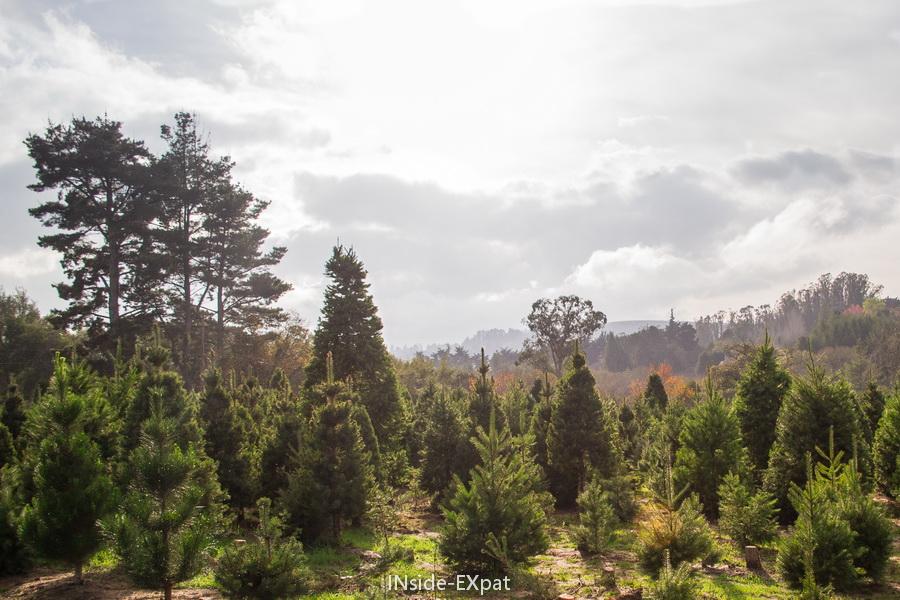 La magnifique plantation de sapins de Garlock Tree Farm