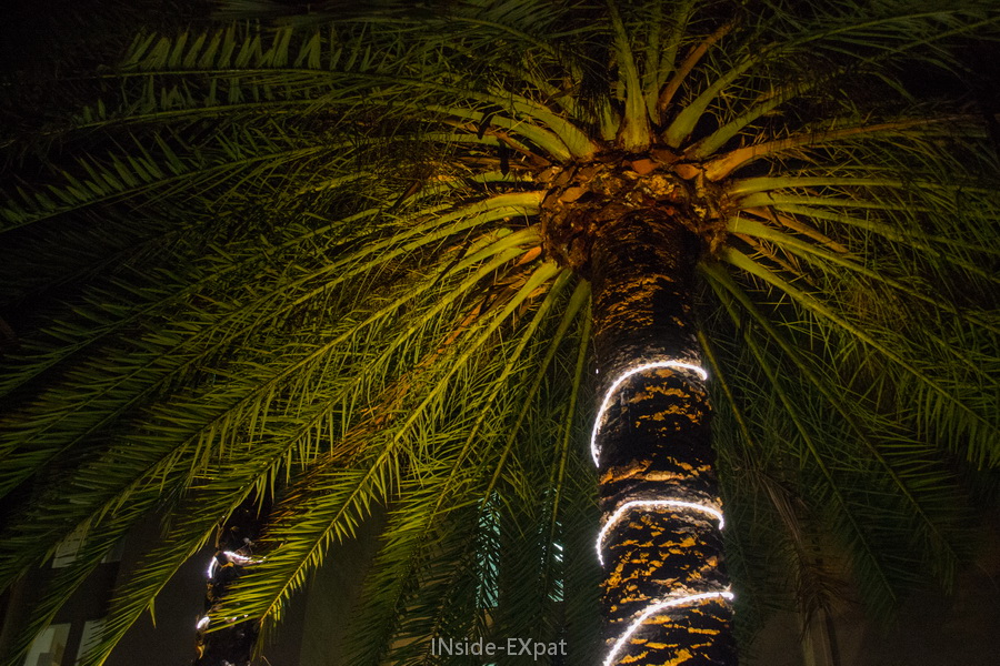 Palmier éclairé pour Noël