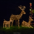 Christmas lights reindeer