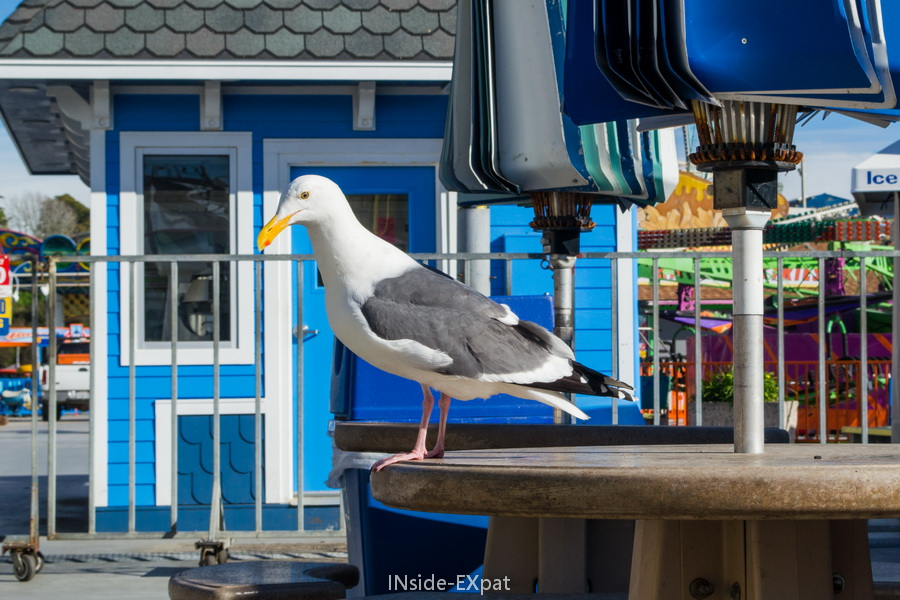 Mouette du Beach Boardwalk