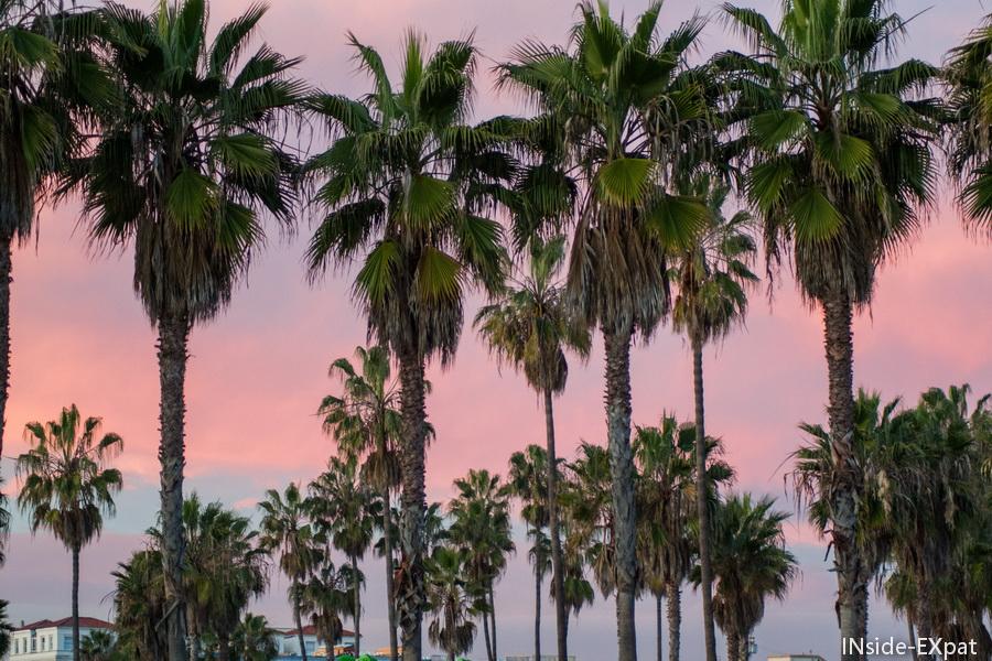 Soleil couchant dans les palmiers