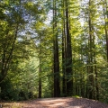 Chemin de Purisima Creek Redwoods