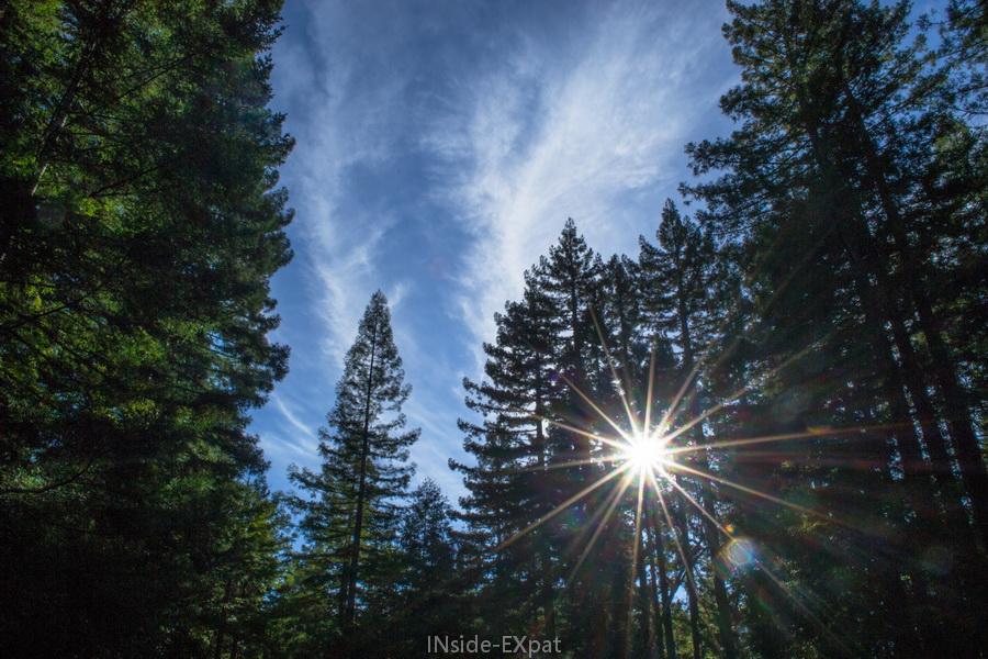Jeu de lumière dans les arbres