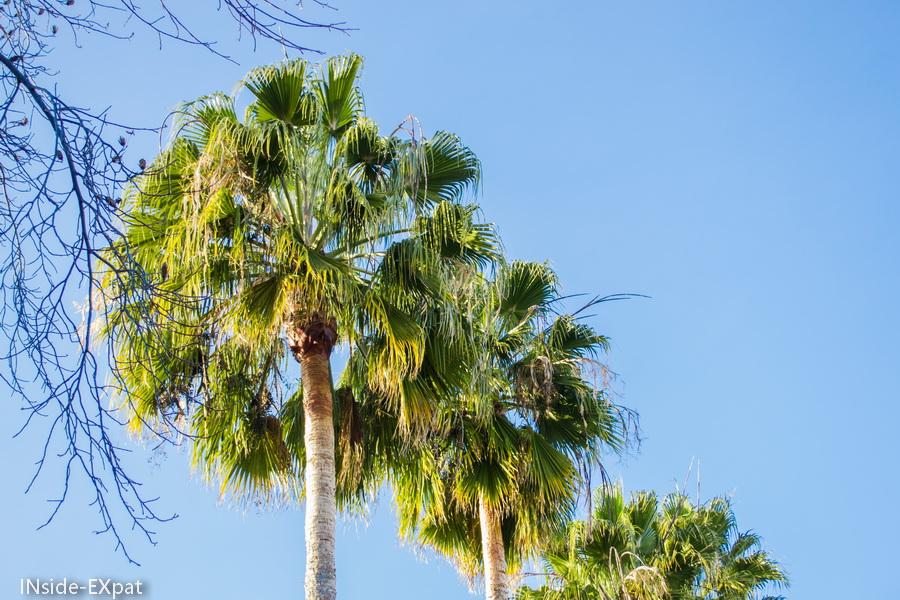 Trio de palmiers