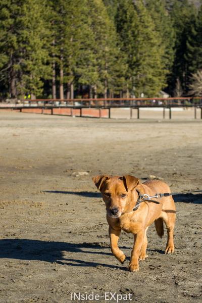Doggy B. sur la plage