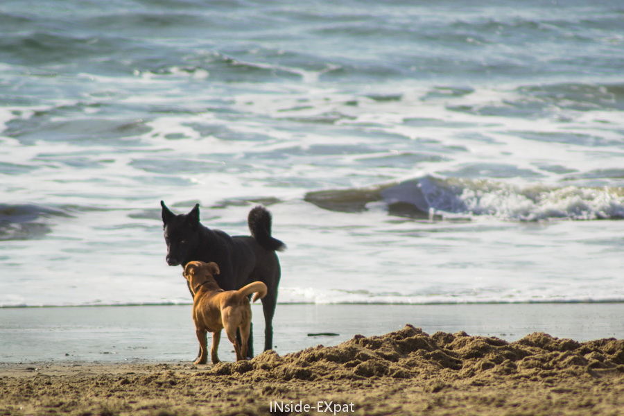 Doggy B. drague sur la plage