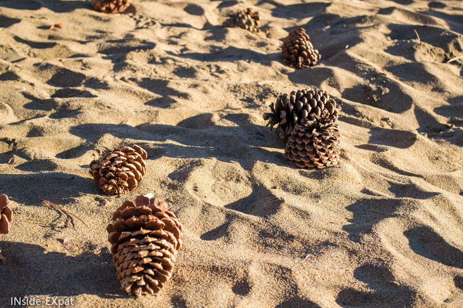 Pommes de pin sur la plage