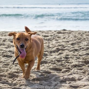 So cool So-Cal – Jour 3 (1/2) : Une plage dédiée aux chiens (Huntington Beach, CA)