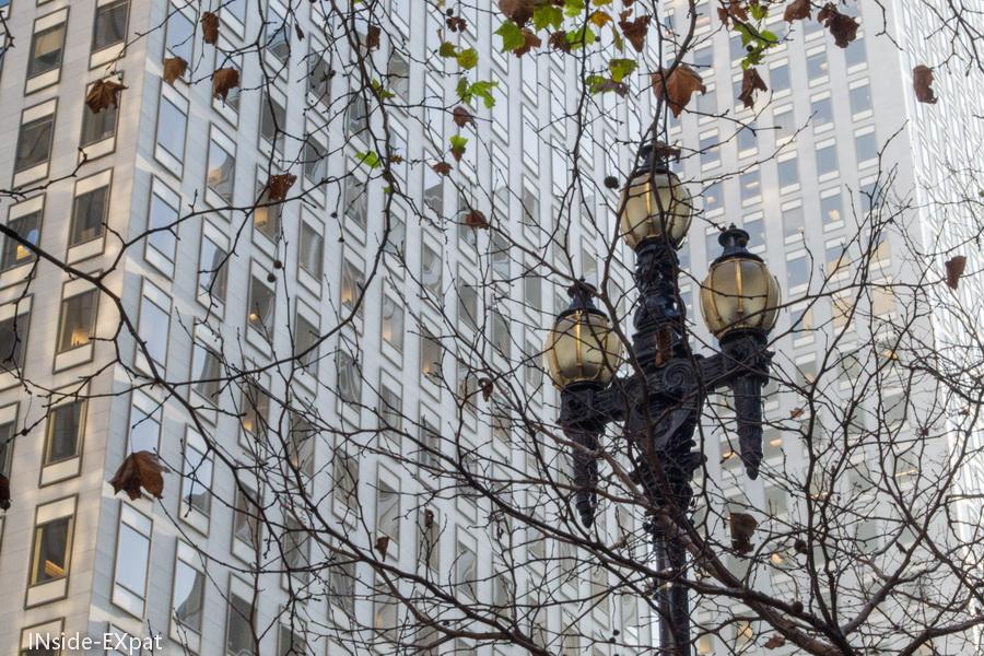 Lampadaire caché derrière les branches